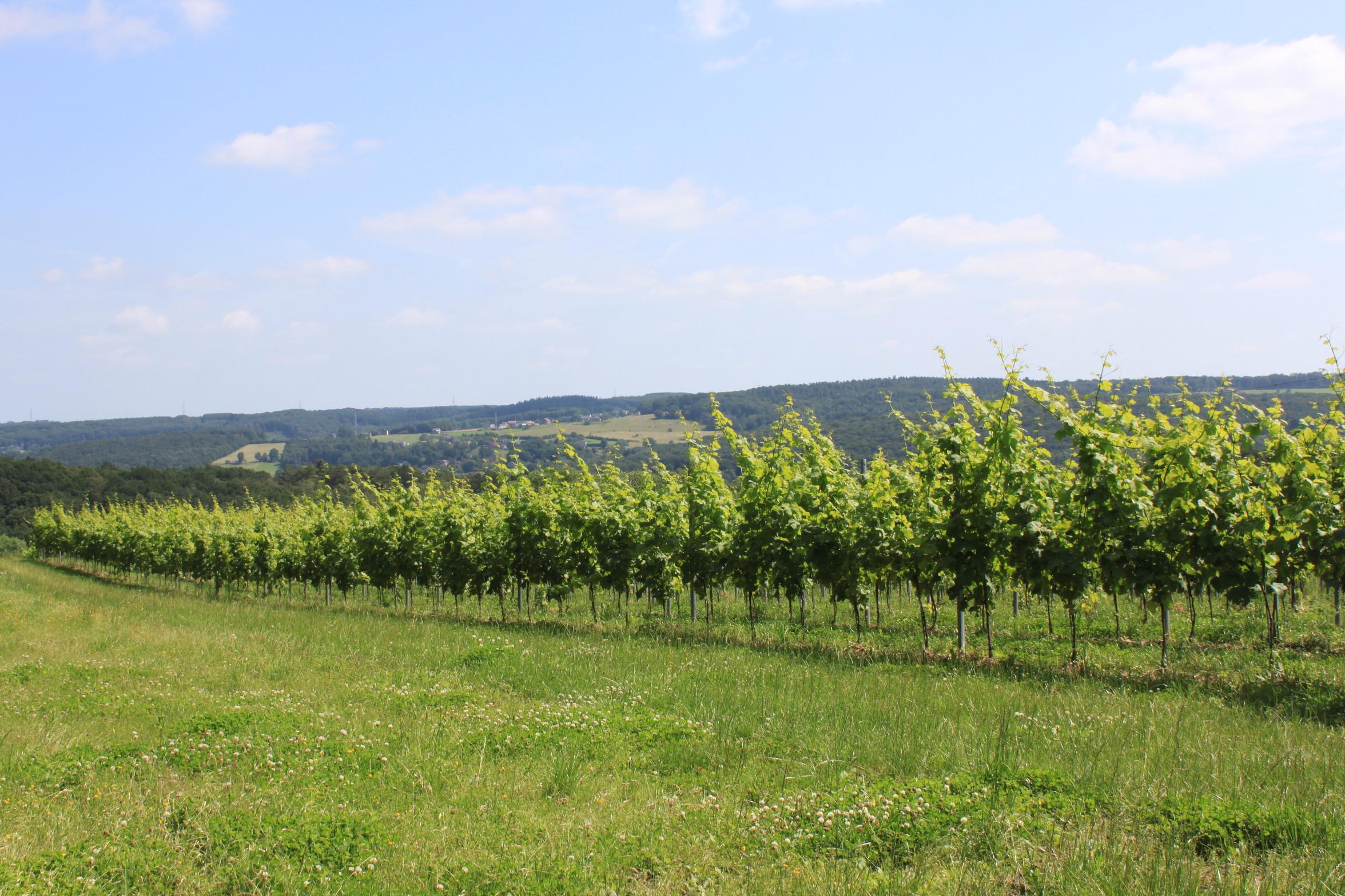 Wijngaard July 2021